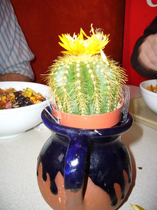 Cactus + Hot Glue + Dried Flower